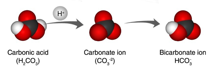Carbon Dioxide Can Make a Solution Acidic   Chapter 6