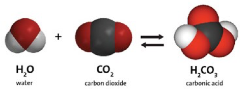 Carbon Dioxide Can Make a Solution Acidic | Chapter 6
