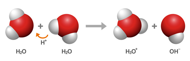 One water molecule donates a proton to a second water molecule, forming a hydronium ion, and a hydroxide ion.  The hydronium ion is designated as H3O+ and the hydroxide ion as OH−.