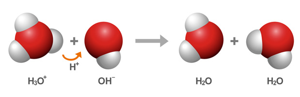 An H3O+ ion donates a proton to an OH- ion, reforming two water molecules