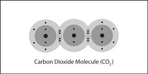 A carbon dioxide molecule, in which a central carbon atom is double bonded to two oxygen atoms.