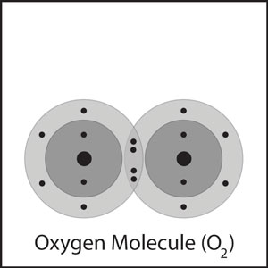 The oxygen atoms form a double bond.  A double bond is formed when two pairs of electrons are shared between atoms, rather than only one pair, as in a single bond.