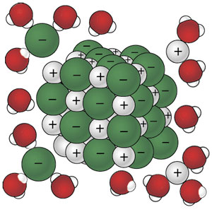 Water with its areas of slight positive and negative charge, is attracted to the component ions of the sodium choride crystal and begins to pull ions away one by one.