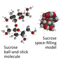 Two space-filling models of sucrose molecules closely associated with one another, based on their corresponding areas of positive and negative charge.