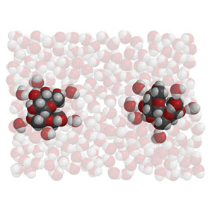 The two sucrose molecules are very far apart, as the water molecules surround them .