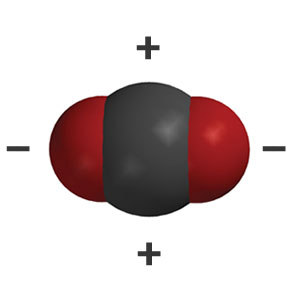 A space-filling model of a carbon dioxide molecule, with plus signs near its carbon atom and minus signs near its oxygen atoms, indicating its areas of lower and higher areas of electron density respectively.