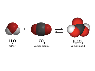 Multimedia: Carbon Dioxide Can Make a Solution Acidic | Chapter 6 ...