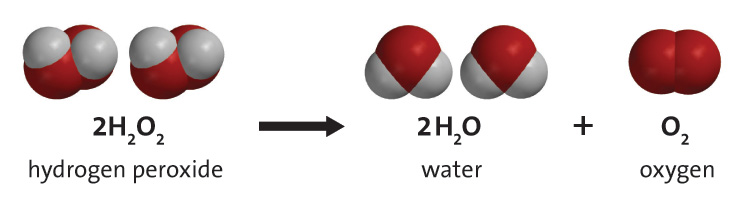 The chemical equation for the decomposition of hydrogen peroxide in the presence of a catalyst. Hydrogen peroxide yields water (in the form of steam) and oxygen.