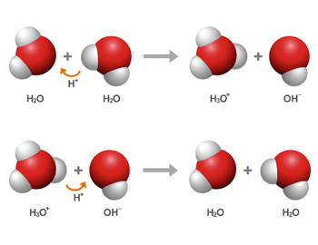 Two chemical equations demonstrating proton transfer in water.  In the first equation, water autoionizes to form a hydroxide and hydronium ion.  In the second equation, the hydronium ion donates a proton to the hydroxide ion to form two water molecules.